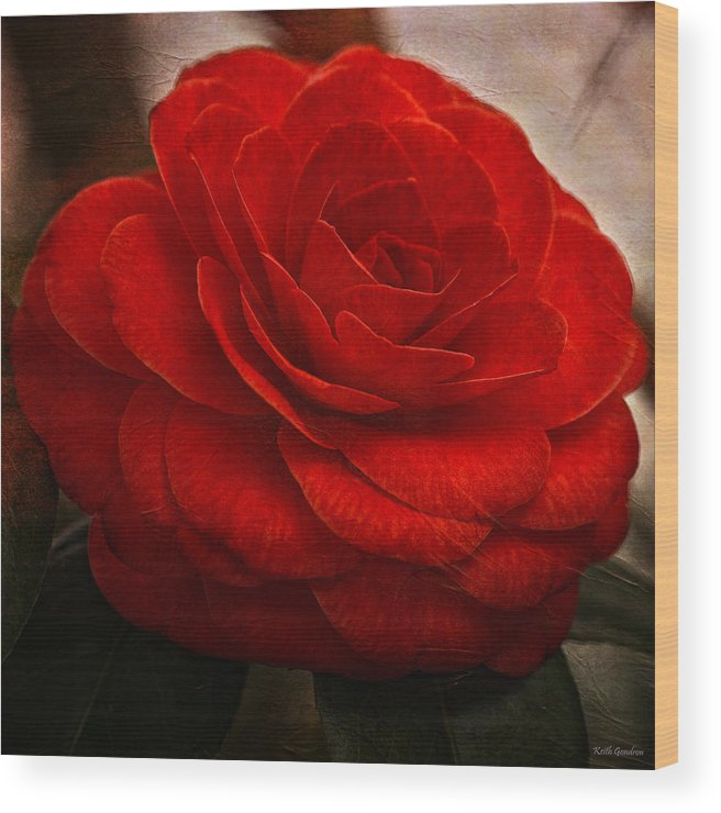 Flower Wood Print featuring the photograph Red Camelia by Keith Gondron