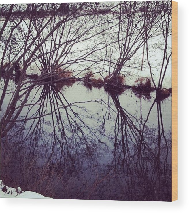 Water Wood Print featuring the photograph #reflection #water #river #bush #pretty by Amber Campanaro