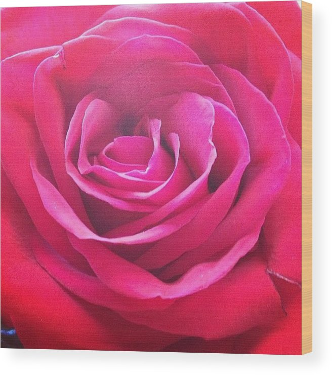 Beautiful Wood Print featuring the photograph #rose #redrose #red #flower #redflower by Amber Campanaro