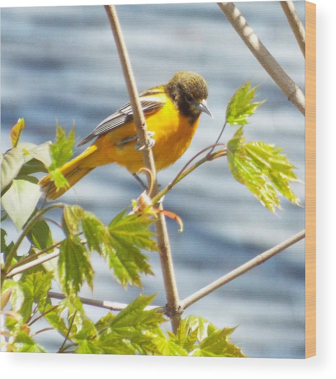 Bird Birds Wood Print featuring the photograph Spring Bird by Lisa Roy