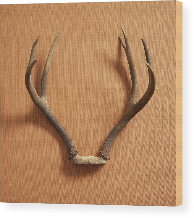 Material Wood Print featuring the photograph Still Life Of Deer Antlers On A Fabric by Gwen Rodgers