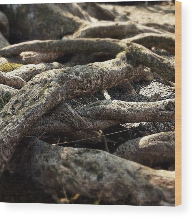 Glendalough Wood Print featuring the photograph Tree Roots by Sean Cahill