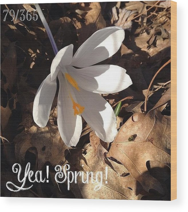 Phonto Wood Print featuring the photograph Yea! Spring! And I Still Have A Few by Teresa Mucha