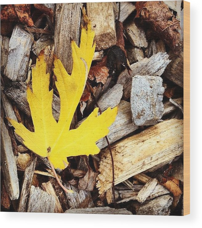 Leaf Wood Print featuring the photograph Yellow Leaf by Christy Beckwith