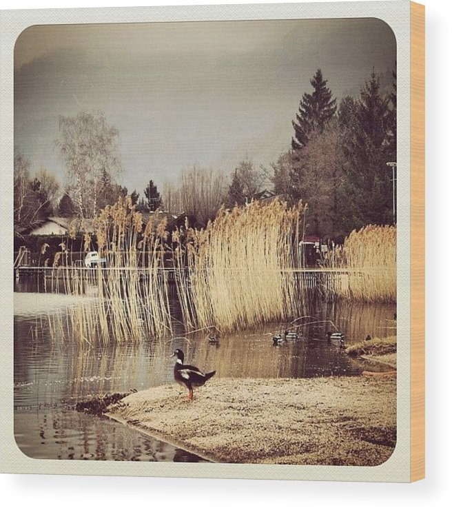 Beautiful Wood Print featuring the photograph A Cloudy Day by Luisa Azzolini