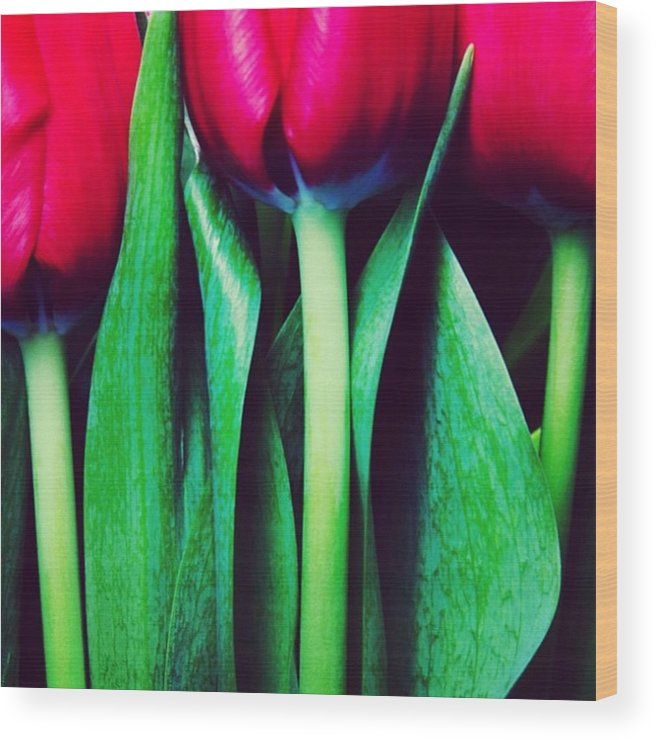 Tulips Wood Print featuring the photograph Instagram Photo by Ritchie Garrod