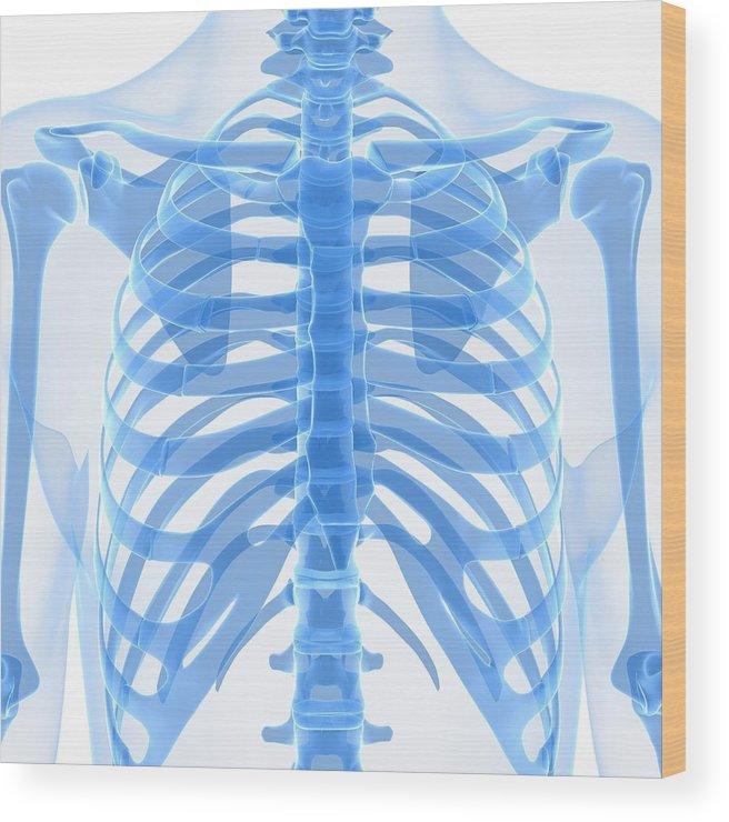 Square Wood Print featuring the digital art Upper Body Bones, Artwork by Sciepro