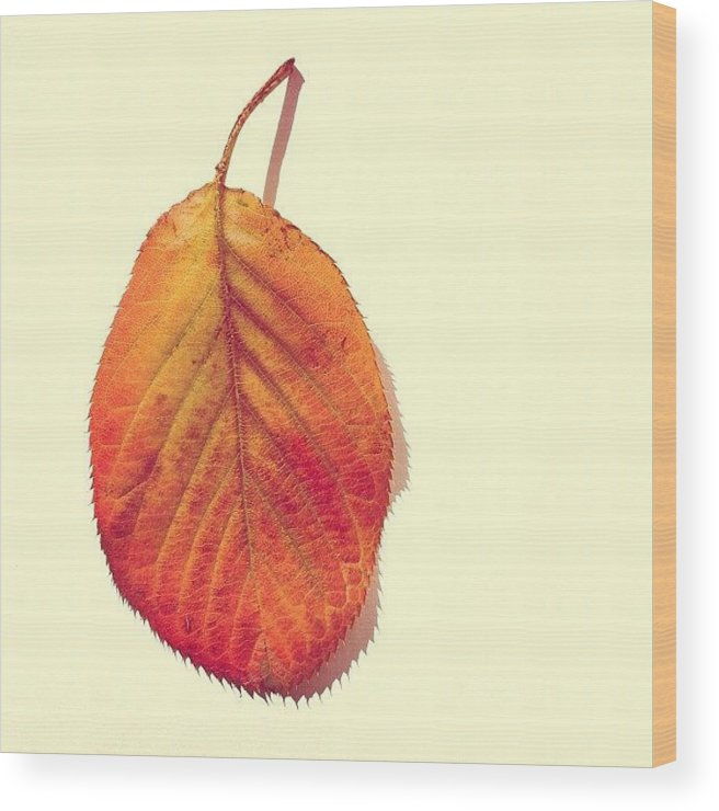 Autumn Wood Print featuring the photograph Autumn by Nic Squirrell