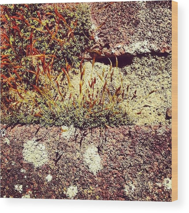 Moss Wood Print featuring the photograph Moss Wall Abstract by Nic Squirrell