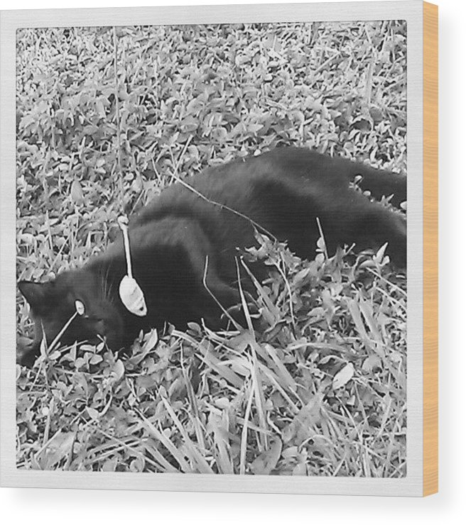 Wood Print featuring the photograph Romeo by Jinxi The House Cat