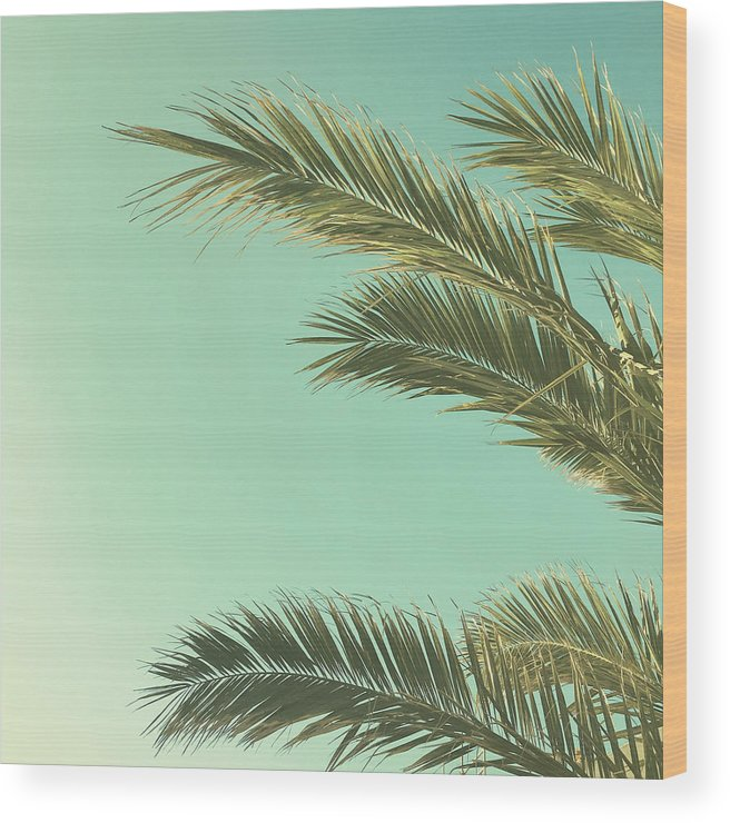Palm Trees Wood Print featuring the photograph Autumn Palms II by Cassia Beck