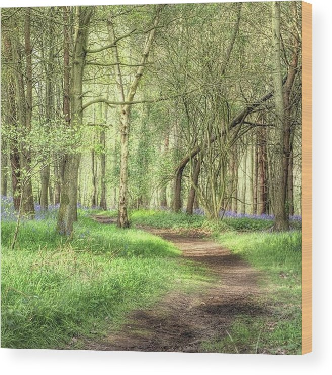 Nature Wood Print featuring the photograph Bentley Woods, Warwickshire #landscape by John Edwards