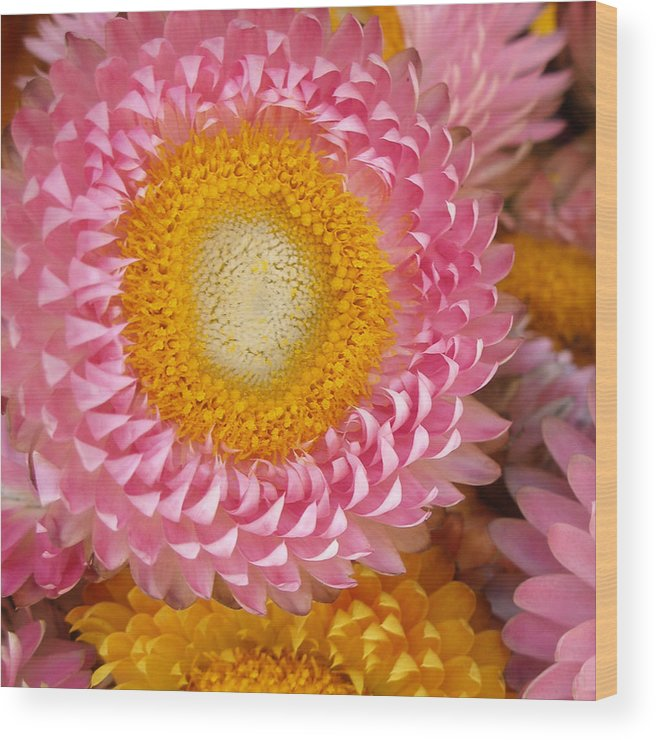 Flower Wood Print featuring the photograph Carmel Flower by Sarah Madsen