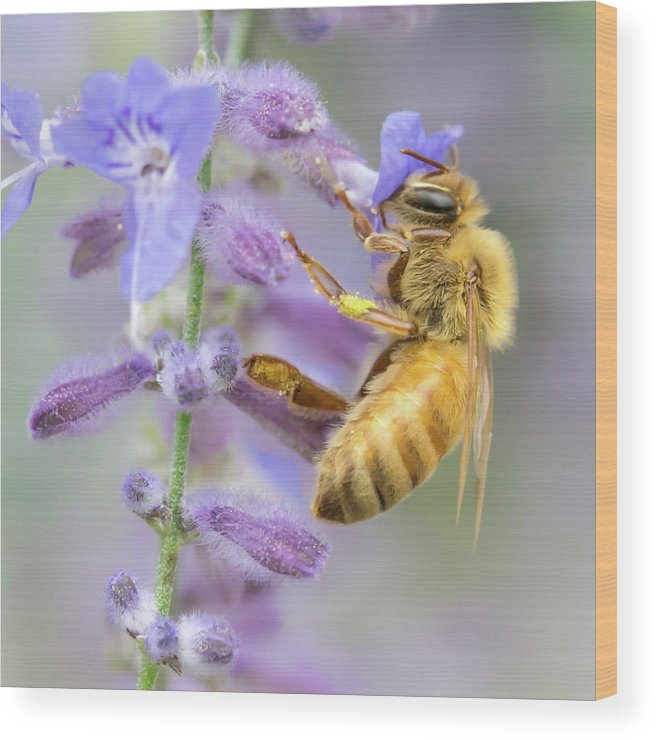 Apidae Wood Print featuring the photograph Honey bee 2 by Jim Hughes