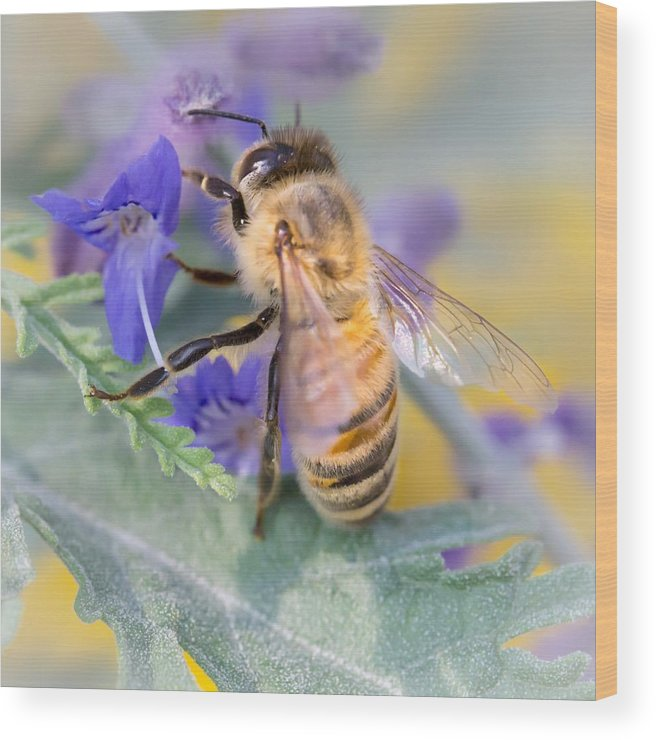 Apidae Wood Print featuring the photograph Honey bee 3 by Jim Hughes