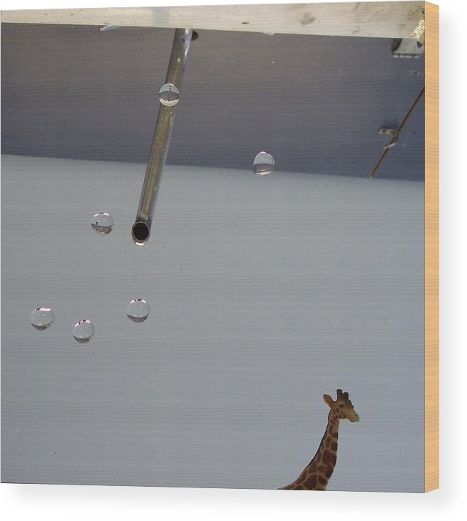 Giraffe Wood Print featuring the photograph In the Sink by Michelle Miron-Rebbe