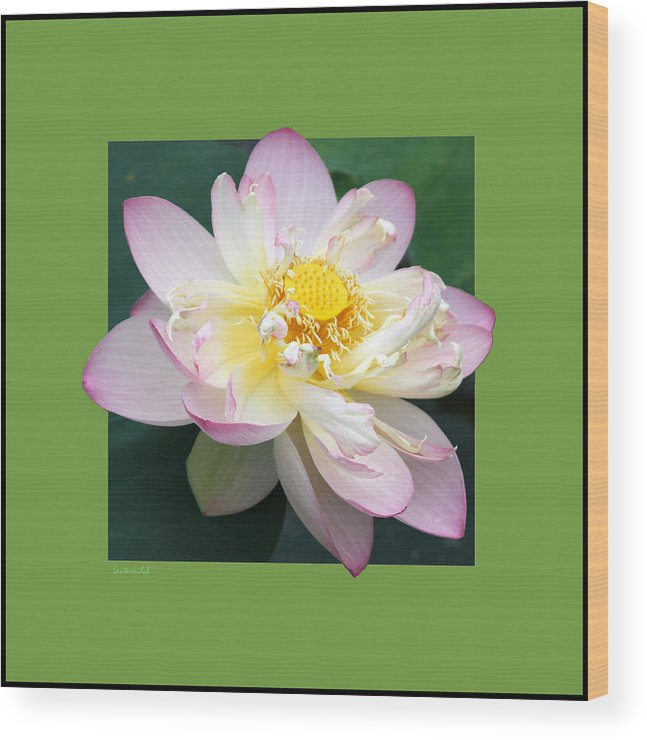 Lotus Wood Print featuring the photograph Lotus On Green by John Lautermilch