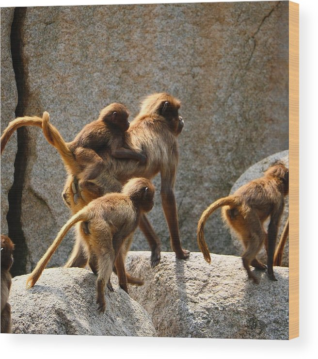 Animal Wood Print featuring the photograph Monkey Family by Dennis Maier