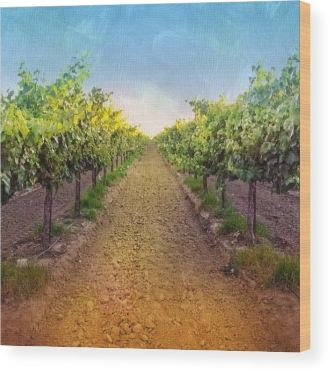 Vineyard Wood Print featuring the photograph Old #vineyard Photo I Rescued From My by Shari Warren