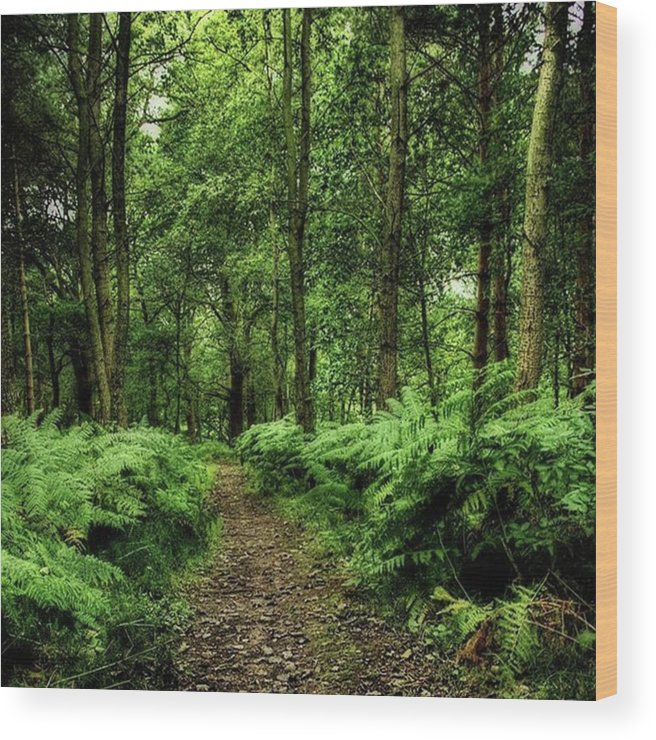 Nature Wood Print featuring the photograph Seeswood, Nuneaton by John Edwards