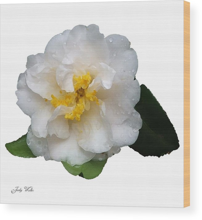 White Wood Print featuring the photograph The White Flower by Judy Waller