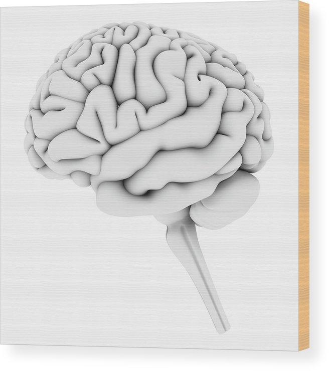 White Background Wood Print featuring the digital art Brain, Artwork by Pasieka