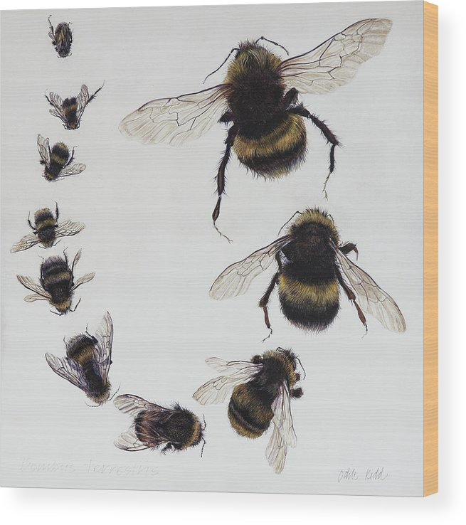 Nature Wood Print featuring the painting Bombus by Odile Kidd