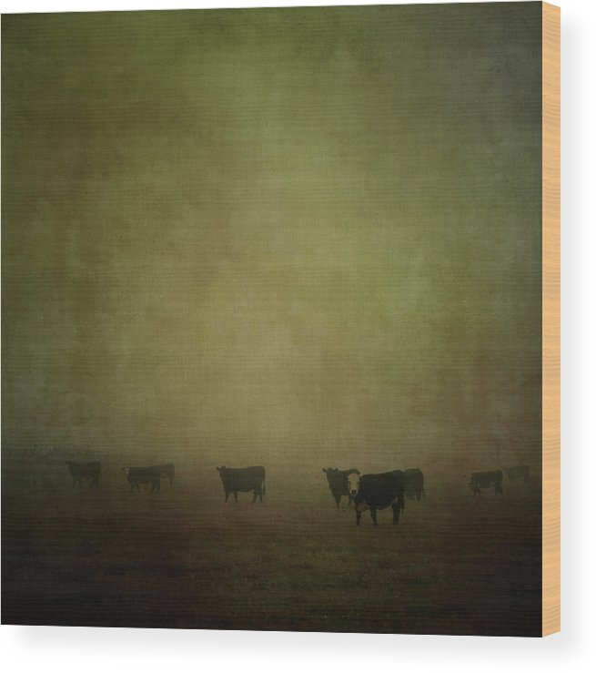 Pets Wood Print featuring the photograph Cattle In The Mist by Jill Ferry