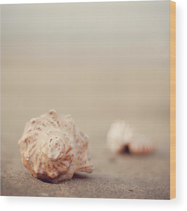 Animal Shell Wood Print featuring the photograph Close Up Of Shells On Beach by Copyright© Marianna Di Ferdinando