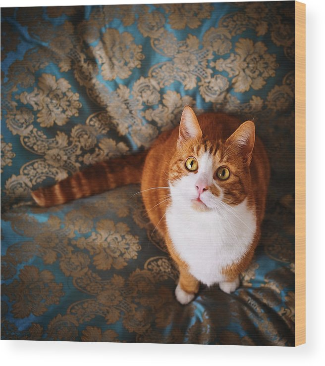 Pets Wood Print featuring the photograph Cute Cat Named Nisse by Knape