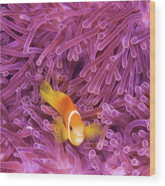 Underwater Wood Print featuring the photograph Fish by Extreme-photographer