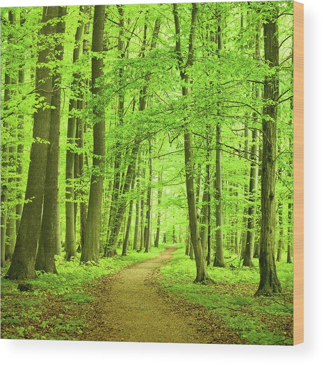 Curve Wood Print featuring the photograph Forest Path by Nikada