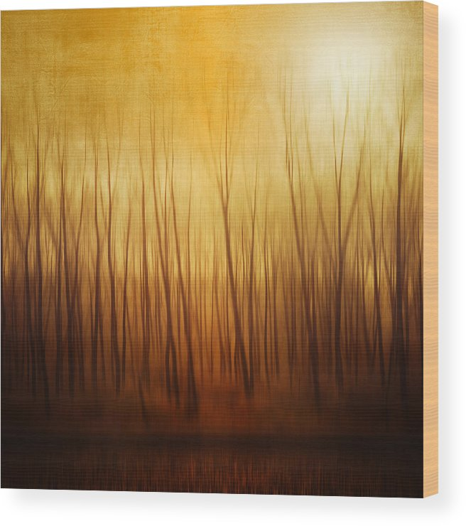 Dawn Wood Print featuring the photograph Forest by Philippe Sainte-laudy Photography