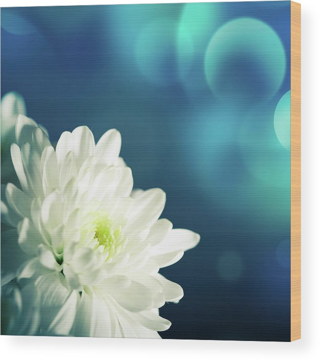 Easter Wood Print featuring the photograph Gerbera by Jeja