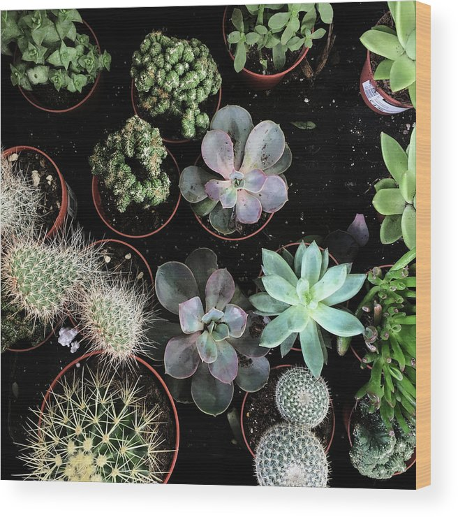 Plants Wood Print featuring the photograph Plant Collection by Cassia Beck