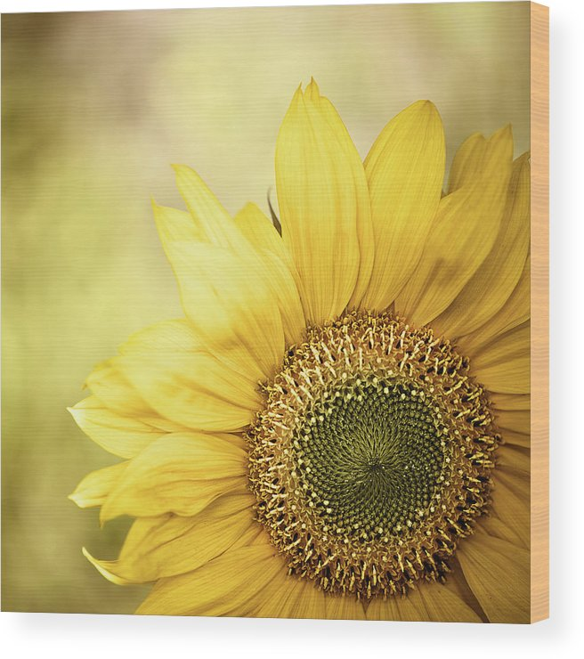 Outdoors Wood Print featuring the photograph Sunflower Blossom With Bokeh Background by Elisabeth Schmitt