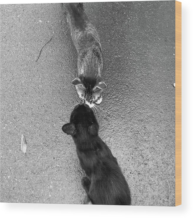 Pets Wood Print featuring the photograph Two Kittens Which Kiss by Photographer, Loves Art, Lives In Kyoto