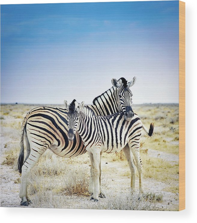Horse Wood Print featuring the photograph Zebra Mother And Her Foal In Etosha by Brytta