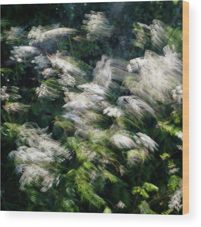 Hedgerow Wood Print featuring the photograph Dancing Hedgerow by Bear R Humphreys