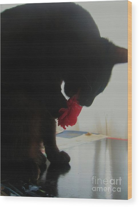 Photograph Cat Black Red Flower Camellia Wood Print featuring the photograph Cat Eating Camellia by Seon-Jeong Kim