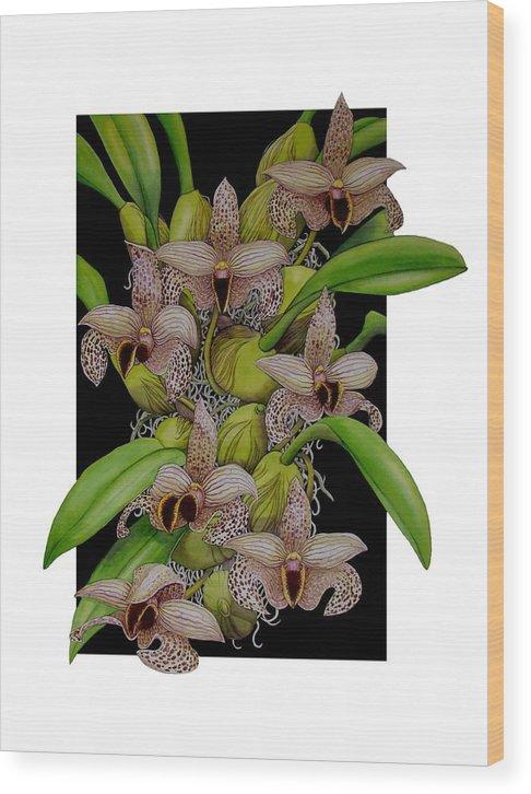 Orchids Wood Print featuring the painting Bulbophyllum Sumatranum by Darren James Sturrock