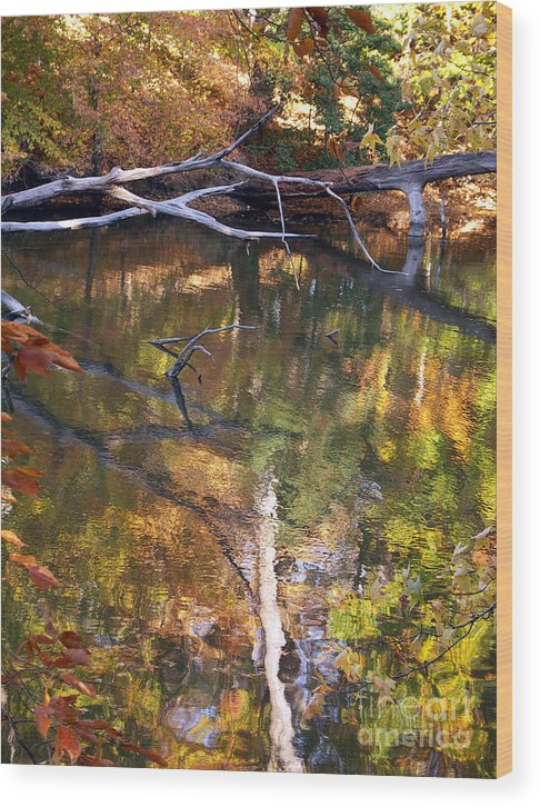 Fall Wood Print featuring the photograph Fall Fallen by J L Gould