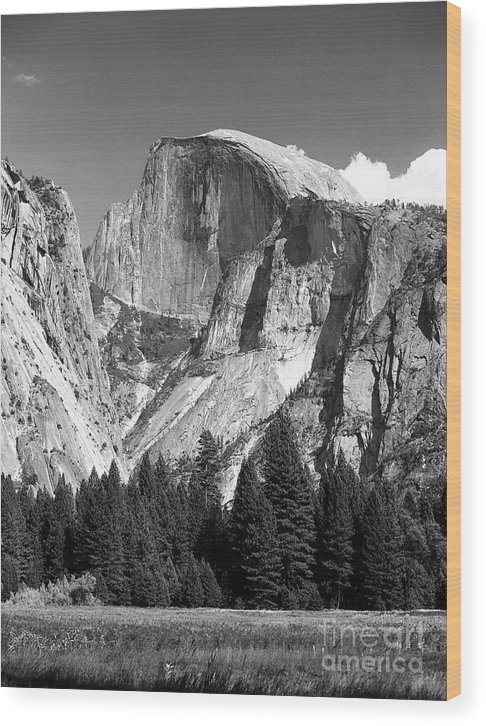 Yosemite Wood Print featuring the photograph Half Dome by Ron Sadlier