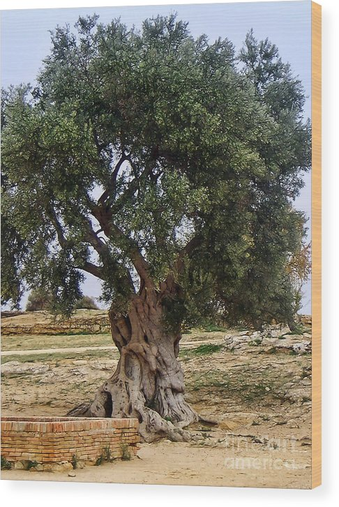 Olive Tree Wood Print featuring the photograph Olive Tree Sicily by Lutz Baar