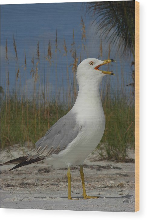 Seagulls Wood Print featuring the photograph Songs Of The Gull by Amanda Vouglas