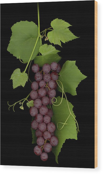 Grapes Wood Print featuring the mixed media Fruit Of The Vine by Sandi F Hutchins