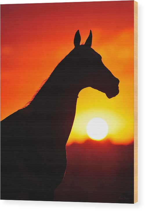 Horses Wood Print featuring the photograph Pirop by Artur Baboev