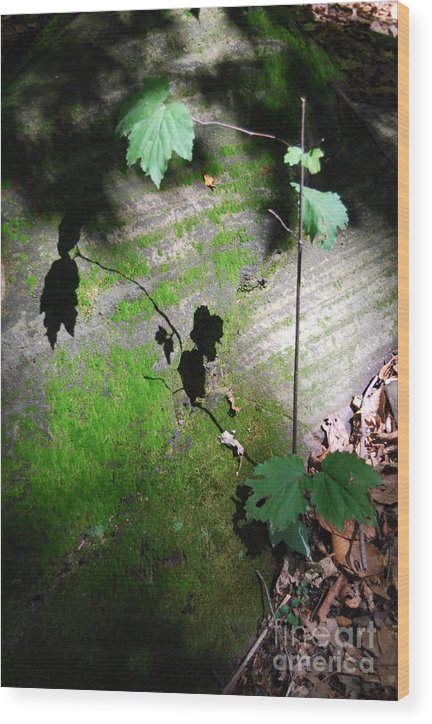 Moss Wood Print featuring the photograph Shadow Play by Trish Hale