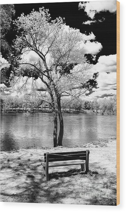 Along The River Wood Print featuring the photograph Along The River At Washington Crossing In New Jersey by John Rizzuto