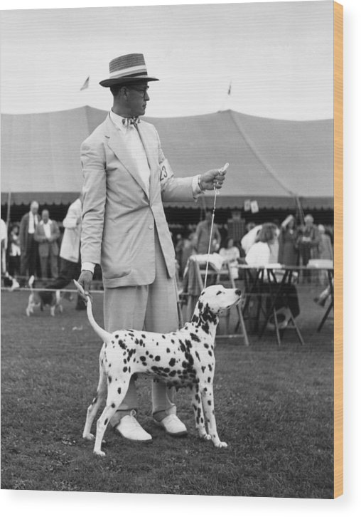 Pets Wood Print featuring the photograph Showing Off by Slim Aarons